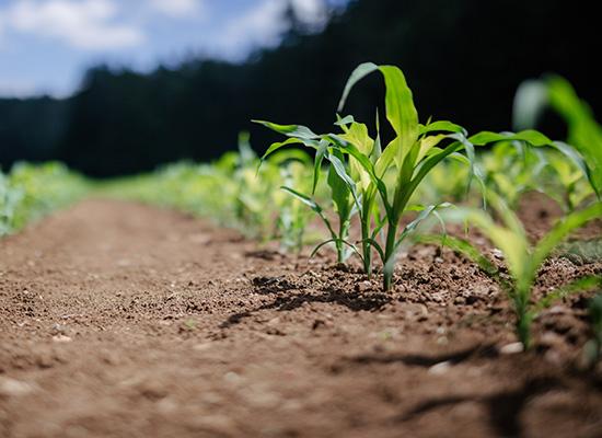 Zahradní válce   Zpevňování a vytlačování půdy
